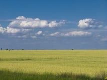 Blauer Himmel des Weizenfeldes Lizenzfreies Stockfoto