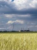 Blauer Himmel des Weizenfeldes Lizenzfreie Stockbilder