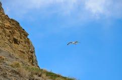 Blauer Himmel, die Steigungsberge und Fliegenvogel Seemöwe Stockbild