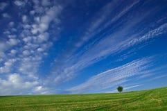 Blauer Himmel, grüne Felder stockbild