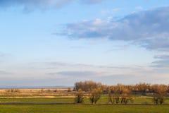 Blauer Himmel, grüne Wiesen, gelegentlich überwältigt mit Schilfen und unter Normalgröße liegenden Bäumen als Hintergrund oder Hi lizenzfreie stockfotos