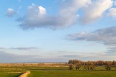 Blauer Himmel, grüne Wiesen, gelegentlich überwältigt mit Schilfen und unter Normalgröße liegenden Bäumen als Hintergrund oder Hi lizenzfreie stockbilder