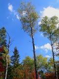 Blauer Himmel, grüner Baum und weiße Wolke Lizenzfreies Stockfoto