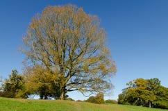 Blauer Himmel, Hügel und ein Baum stockfotografie