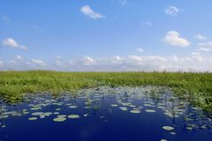Blauer Himmel im grünen Plan der Florida-Sumpfgebietfeuchtgebiete Lizenzfreies Stockbild