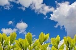 Blauer Himmel im Sommer Stockfotografie