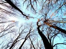 Blauer Himmel im Wald zwischen den Niederlassungen Stockfotos
