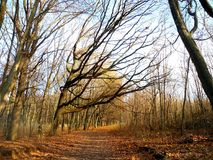 Blauer Himmel im Wald zwischen den Niederlassungen Stockfoto
