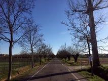 Blauer Himmel, leere Niederlassungen in einer Landstraße Lizenzfreie Stockfotos
