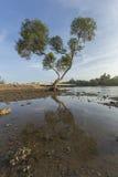 blauer Himmel mit alleinbaum in der Strand chumphon Südprovinz von Stockbild
