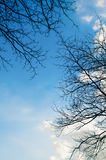 Blauer Himmel mit Ast des Baums Stockfoto