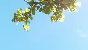 Blauer Himmel mit Bäumen stock video