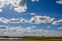 Blauer Himmel mit den weißen, flaumigen, zarten Kumuluswolken, gelbes Feld lizenzfreie stockbilder