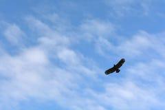 Blauer Himmel mit Eagles Stockfotos