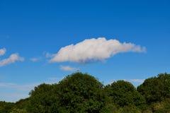 Blauer Himmel mit einigen Wolken über dunkelgrünen Bäumen stockbild