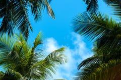 Blauer Himmel mit einigen Wolken und Palmen stockfotografie