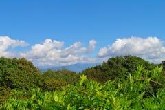 Blauer Himmel mit grünen Büschen Stockfoto