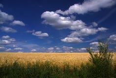 Blauer Himmel mit weißen Wolken Stockbild