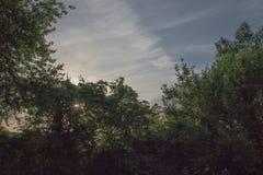 Blauer Himmel mit wispy Wolken stockfoto