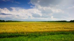Blauer Himmel mit Wolken über Feld des goldenen Weizens Stockfotos