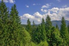 Blauer Himmel mit Wolken der Kiefer und der Fichte Lizenzfreie Stockfotografie