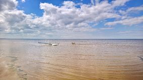 Blauer Himmel mit Wolken setzen das Surfen und Labrador-Hund auf den Strand stockbild