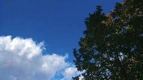 Blauer Himmel mit Wolken und Baum stock footage
