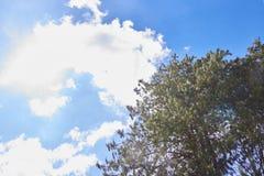 Blauer Himmel mit Wolken und einem Wald stockbilder