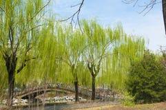 Blauer Himmel nach Regen in Tsinghua-Universität Stockbilder