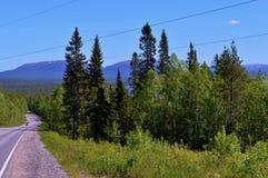 Blauer Himmel Straße Wald Stockbilder