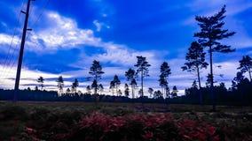Blauer Himmel in Swinley-Wald, Berkshire lizenzfreie stockbilder