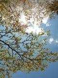 Blauer Himmel-Tag und Urlaub stockbilder