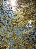 Blauer Himmel-Tag und Urlaub lizenzfreie stockfotografie
