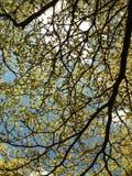 Blauer Himmel-Tag und Urlaub stockfoto