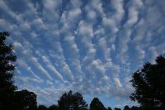 Blauer Himmel u. Wolken mit Bäumen Stockbilder