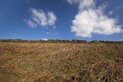 Blauer Himmel und Adlerfarn Stockfoto