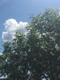 Blauer Himmel und Bäume des Sonnenscheins Lizenzfreie Stockbilder