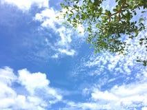 Blauer Himmel und Baum stockfotografie