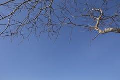 Blauer Himmel und Baumast Stockfotografie