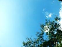 Blauer Himmel und Baumaste grünen abstrakten Hintergrund der Natur Stockfotos