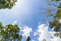 Blauer Himmel und Blätter des Baums Lizenzfreie Stockfotos