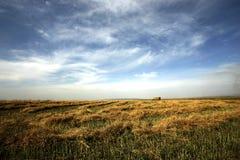 Blauer Himmel und Feld Stockfoto