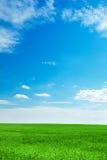 Blauer Himmel und Feld des grünen Grases Stockfotografie