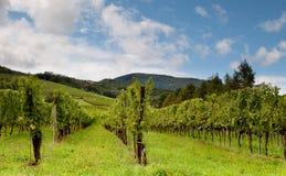 Blauer Himmel und französische Weinberge stockfoto
