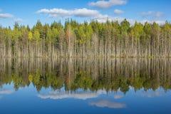 Blauer Himmel und grüne Bäume in der klaren See-Spiegel-Wasser-Reflexion stockfotos