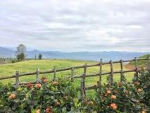 Blauer Himmel und grünes Feld Stockfoto