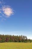 Blauer Himmel und grünes Feld am Sommer Lizenzfreie Stockfotografie