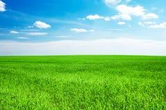 Blauer Himmel und grünes Gras Stockfotografie