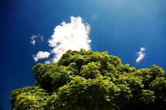 Blauer Himmel und grünes Laub stockbild