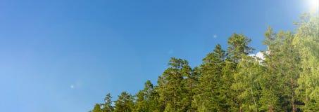 Blauer Himmel und grünes Waldpanorama stockbilder